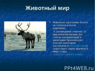 Животный мир Животное население богаче на склонах и возле водоёмов. В заповедник