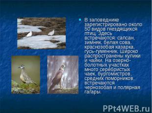 В заповеднике зарегистрировано около 50 видов гнездящихся птиц. Здесь встречаютс