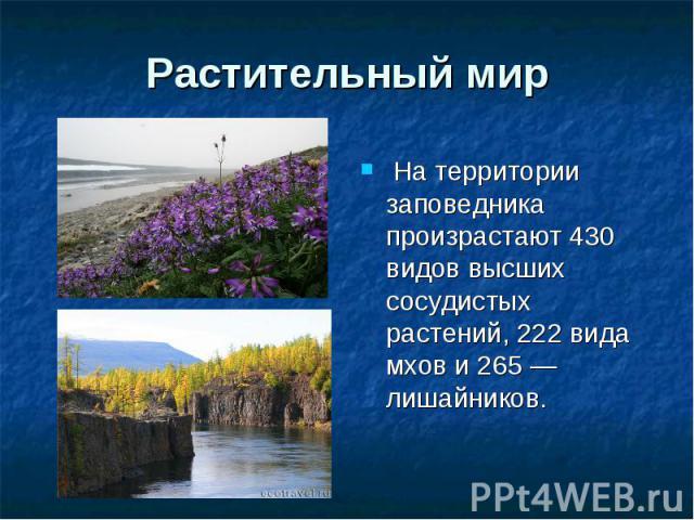 Растительный мир На территории заповедника произрастают 430 видов высших сосудистых растений, 222 вида мхов и 265— лишайников.