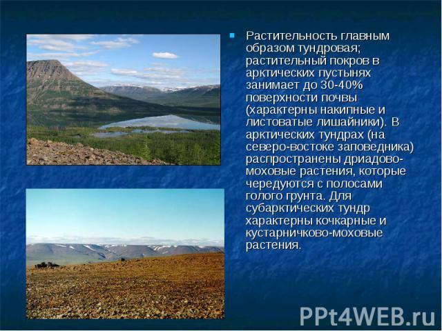 Растительность главным образом тундровая; растительный покров в арктических пустынях занимает до 30-40% поверхности почвы (характерны накипные и листоватые лишайники). В арктических тундрах (на северо-востоке заповедника) распространены дриадово-мох…