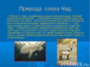 Природа озера Чад Обитает в Чаде редкий вид водных млекопитающих: близкий родич