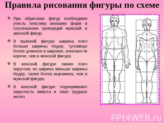 Правила рисования фигуры по схеме При обрисовке фигур необходимо учесть пластику внешних форм и соотношение пропорций мужской и женской фигур. В мужской фигуре ширина плеч больше ширины бедер, туловище более длинное и широкое, конечности короче, чем…
