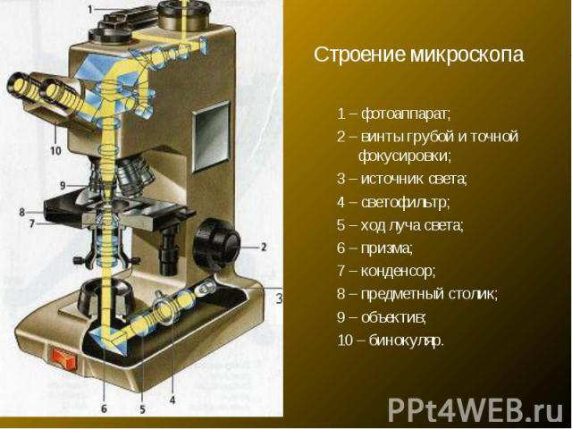 Строение микроскопа1 – фотоаппарат; 2 – винты грубой и точной фокусировки; 3 – источник света; 4 – светофильтр; 5 – ход луча света; 6 – призма; 7 – конденсор; 8 – предметный столик; 9 – объектив; 10 – бинокуляр.