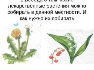 1.Беседа о том, какие лекарственные растения можно собирать в данной местности.
