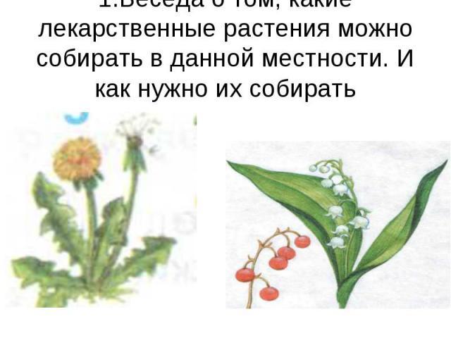 1.Беседа о том, какие лекарственные растения можно собирать в данной местности. И как нужно их собирать