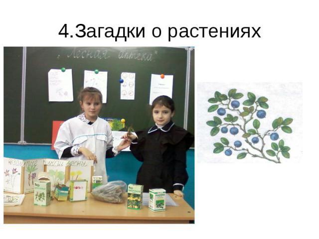 4.Загадки о растениях