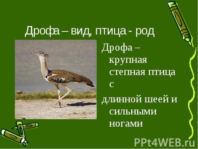 Дрофа – вид, птица - род Дрофа – крупная степная птица с длинной шеей и сильными ногами