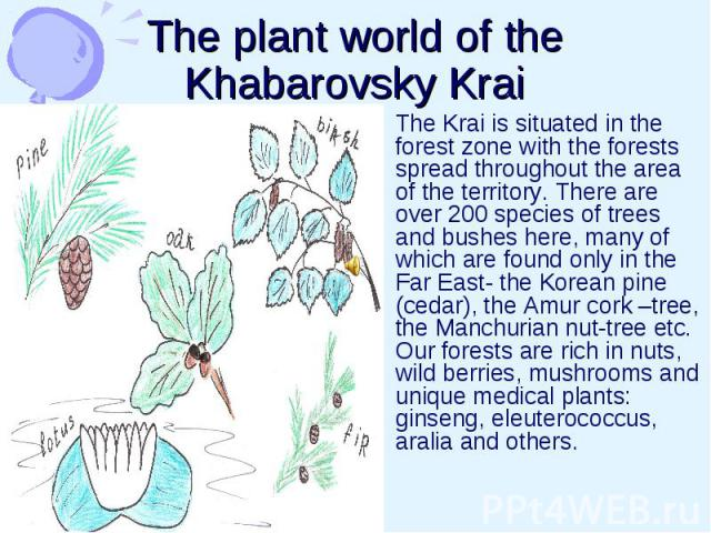 The plant world of the Khabarovsky Krai The Krai is situated in the forest zone with the forests spread throughout the area of the territory. There are over 200 species of trees and bushes here, many of which are found only in the Far East- the Kore…