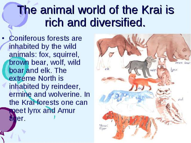 The animal world of the Krai is rich and diversified. Coniferous forests are inhabited by the wild animals: fox, squirrel, brown bear, wolf, wild boar and elk. The extreme North is inhabited by reindeer, ermine and wolverine. In the Krai forests one…
