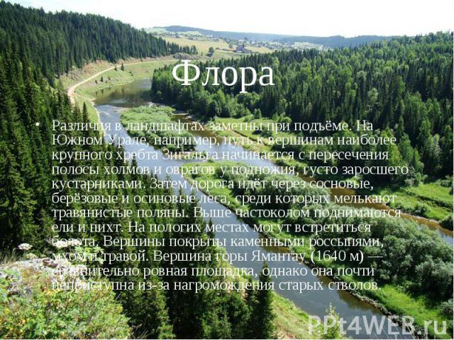 Флора Различия в ландшафтах заметны при подъёме. На Южном Урале, например, путь к вершинам наиболее крупного хребта Зигальга начинается с пересечения полосы холмов и оврагов у подножия, густо заросшего кустарниками. Затем дорога идёт через сосновые,…