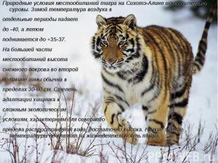 Природные условия местообитаний тигра на Сихотэ-Алине исключительно суровы. Зимо