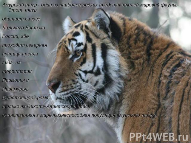 Амурский тигр - один из наиболее редких представителей мировой фауны. Этот тигр обитает на юге Дальнего Востока России, где проходит северная граница ареала вида, на территории Приморья и Приамурья. В настоящее время только на Сихотэ-Алине сохранила…