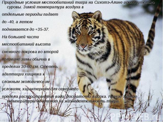 Природные условия местообитаний тигра на Сихотэ-Алине исключительно суровы. Зимой температура воздуха в отдельные периоды падает до -40, а летом поднимается до +35-37. На большей части местообитаний высота снежного покрова во второй половине зимы об…
