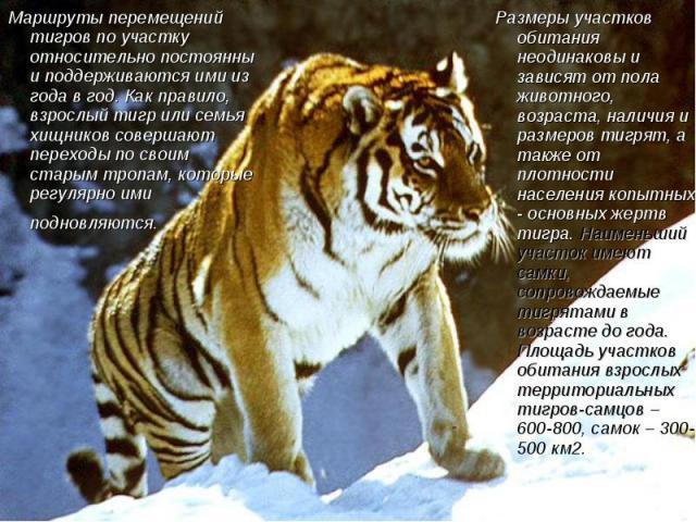 Маршруты перемещений тигров по участку относительно постоянны и поддерживаются ими из года в год. Как правило, взрослый тигр или семья хищников совершают переходы по своим старым тропам, которые регулярно ими подновляются. Размеры участков обитания …