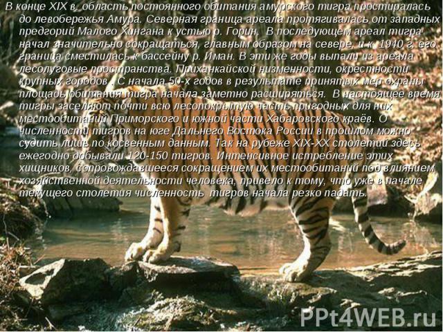 В конце XIX в. область постоянного обитания амурского тигра простиралась до левобережья Амура. Северная граница ареала протягивалась от западных предгорий Малого Хингана к устью р. Горин. В последующем ареал тигра начал значительно сокращаться, глав…