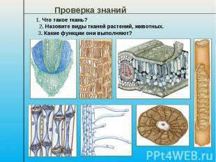 Проверка знаний 1. Что такое ткань? 2. Назовите виды тканей растений, животных.