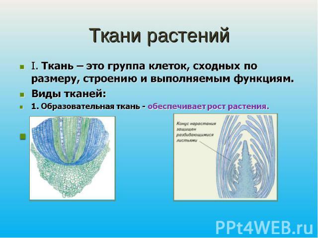 Ткани растенийI. Ткань – это группа клеток, сходных по размеру, строению и выполняемым функциям. Виды тканей: 1. Образовательная ткань - обеспечивает рост растения. Зона