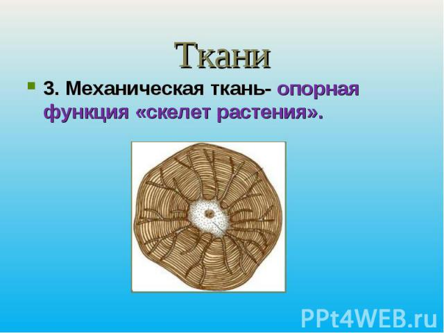 Ткани3. Механическая ткань- опорная функция «скелет растения».