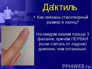 Да'ктиль Как связаны стихотворный размер и палец? На каждом вашем пальце 3 фалан