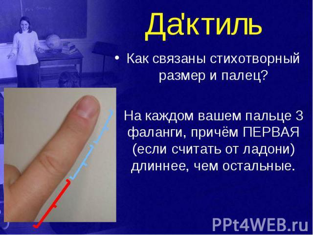 Да'ктиль Как связаны стихотворный размер и палец? На каждом вашем пальце 3 фаланги, причём ПЕРВАЯ (если считать от ладони) длиннее, чем остальные.