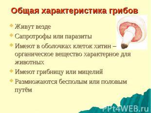 Общая характеристика грибов Живут везде Сапротрофы или паразиты Имеют в оболочка