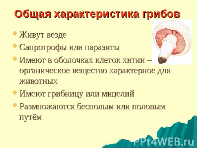 Общая характеристика грибов Живут везде Сапротрофы или паразиты Имеют в оболочках клеток хитин – органическое вещество характерное для животных Имеют грибницу или мицелий Размножаются бесполым или половым путём