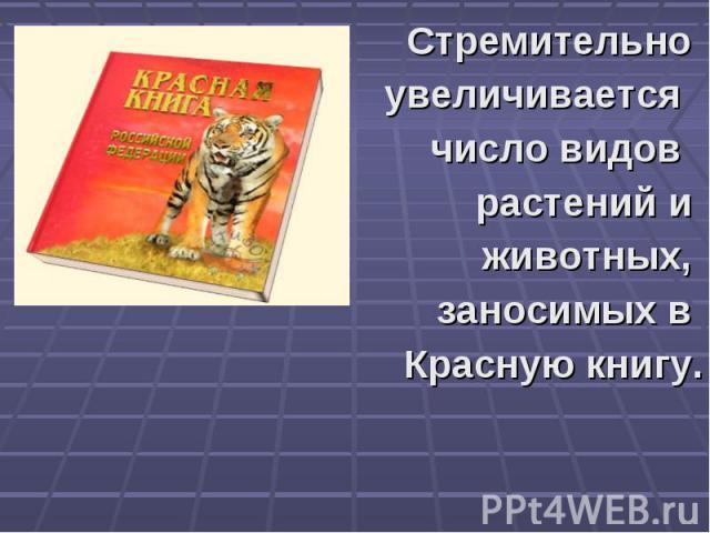 Стремительно увеличивается число видов растений и животных, заносимых в Красную книгу.