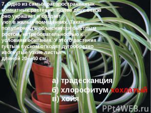 7. Одно из самых распространенных комнатных растений. Более двух веков оно украш
