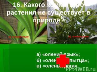 16. Какого комнатного растения не существует в природе? б) «оленьи копытца»; а)
