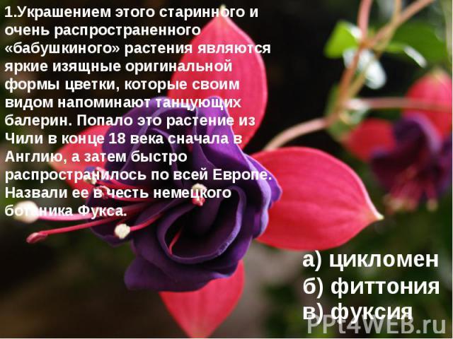 1.Украшением этого старинного и очень распространенного «бабушкиного» растения являются яркие изящные оригинальной формы цветки, которые своим видом напоминают танцующих балерин. Попало это растение из Чили в конце 18 века сначала в Англию, а затем …