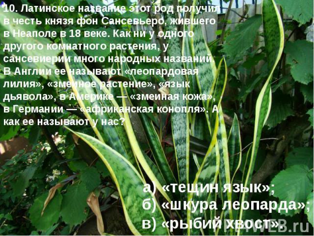10. Латинское название этот род получил в честь князя фон Сансевьеро, жившего в Неаполе в 18 веке. Как ни у одного другого комнатного растения, у сансевиерии много народных названий. В Англии ее называют «леопардовая лилия», «змеиное растение», «язы…