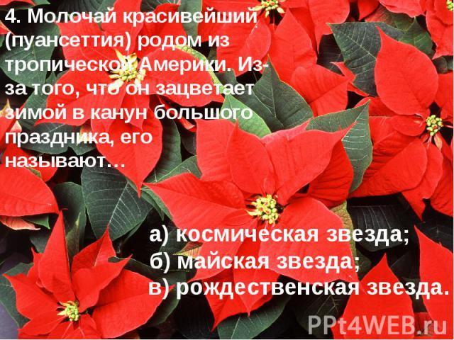4. Молочай красивейший (пуансеттия) родом из тропической Америки. Из-за того, что он зацветает зимой в канун большого праздника, его называют… а) космическая звезда; б) майская звезда; в) рождественская звезда.
