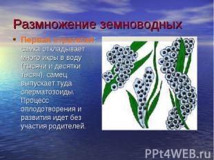 Размножение земноводныхПервая стратегия: самка откладывает много икры в воду (ты
