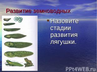 Развитие земноводных Назовите стадии развития лягушки.