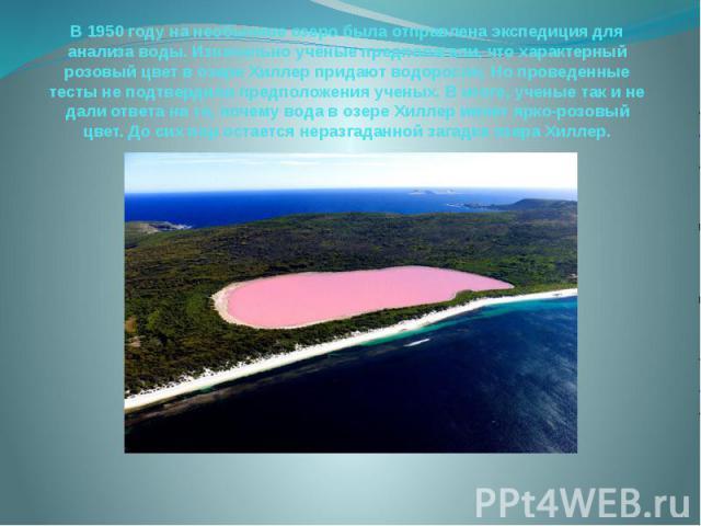 В 1950 году на необычное озеро была отправлена экспедиция для анализа воды. Изначально учёные предполагали, что характерный розовый цвет в озере Хиллер придают водоросли. Но проведенные тесты не подтвердили предположения ученых. В итоге, ученые так …