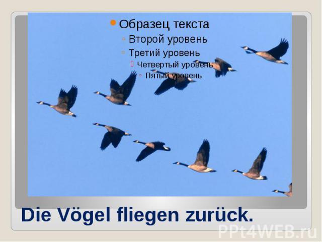 Die Vögel fliegen zurück.