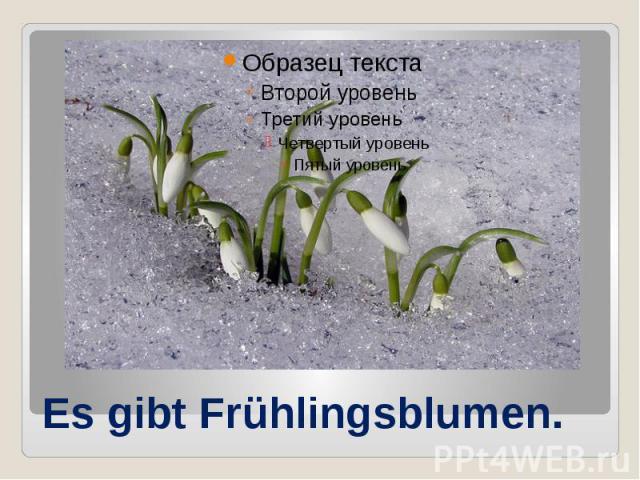 Es gibt Frühlingsblumen.