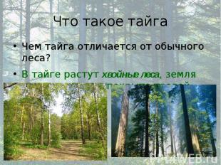 Что такое тайга Чем тайга отличается от обычного леса? В тайге растут хвойные ле