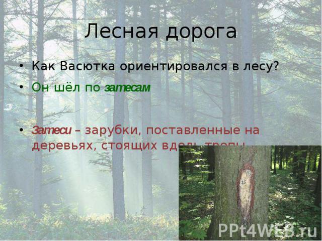 Лесная дорога Как Васютка ориентировался в лесу? Он шёл по затесам Затеси – зарубки, поставленные на деревьях, стоящих вдоль тропы
