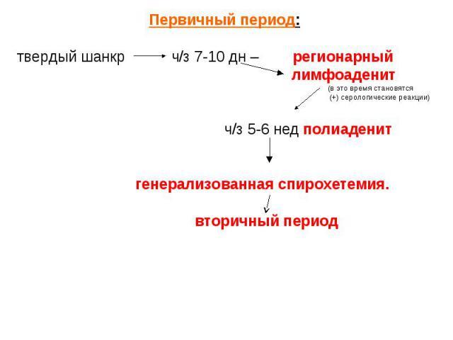 Первичный период: Первичный период: твердый шанкр ч/з 7-10 дн – регионарный лимфоаденит (в это время становятся (+) серологические реакции) ч/з 5-6 нед полиаденит генерализованная спирохетемия. вторичный период