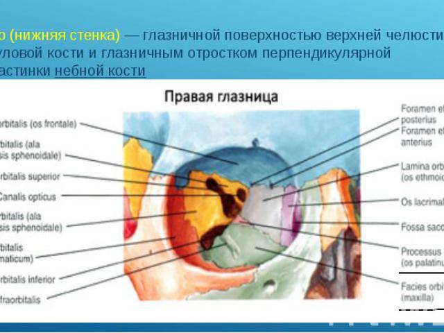 дно (нижняя стенка)— глазничной поверхностью верхней челюсти, скуловой кости и глазничным отростком перпендикулярной пластинкинебной кости дно (нижняя стенка)— глазничной поверхностью верхней челюсти, скуловой кости и глазничным от…