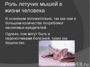 Роль летучих мышей в жизни человека В основном положительна, так как они в больш