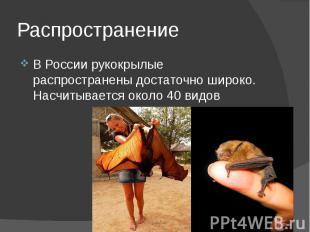 Распространение В России рукокрылые распространены достаточно широко. Насчитывае
