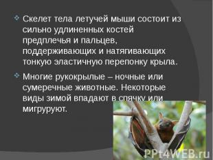 Скелет тела летучей мыши состоит из сильно удлиненных костей предплечья и пальце