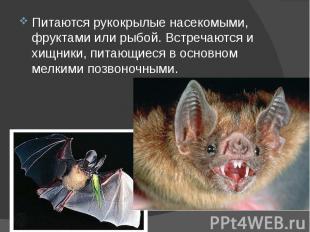 Питаются рукокрылые насекомыми, фруктами или рыбой. Встречаются и хищники, питаю