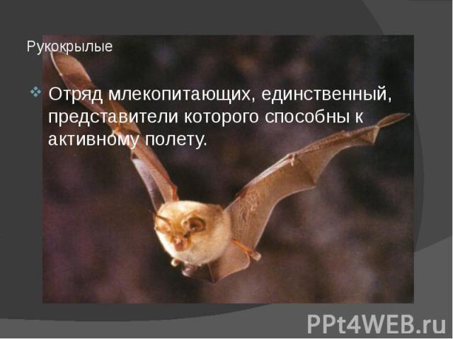Рукокрылые Отряд млекопитающих, единственный, представители которого способны к активному полету.