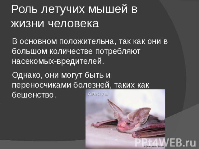 Роль летучих мышей в жизни человека В основном положительна, так как они в большом количестве потребляют насекомых-вредителей. Однако, они могут быть и переносчиками болезней, таких как бешенство.