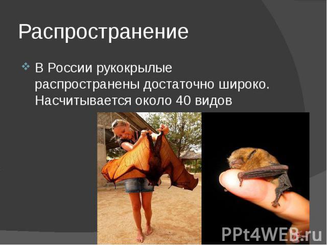 Распространение В России рукокрылые распространены достаточно широко. Насчитывается около 40 видов