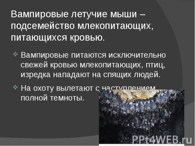 Вампировые летучие мыши – подсемейство млекопитающих, питающихся кровью. Вампировые питаются исключительно свежей кровью млекопитающих, птиц, изредка нападают на спящих людей. На охоту вылетают с наступлением полной темноты.