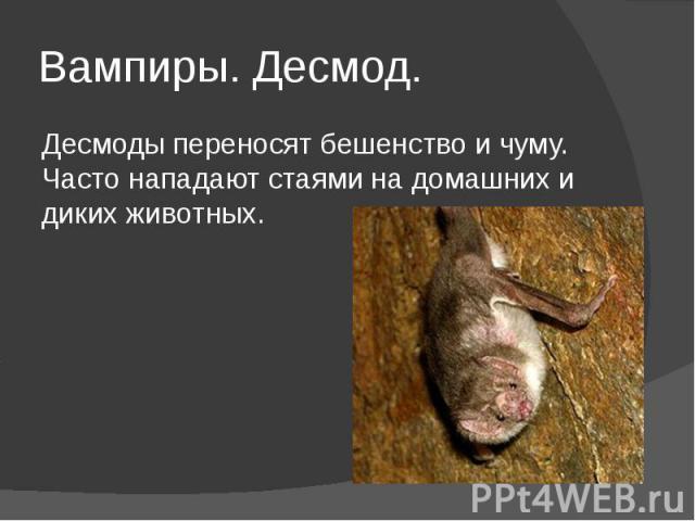 Вампиры. Десмод. Десмоды переносят бешенство и чуму. Часто нападают стаями на домашних и диких животных.